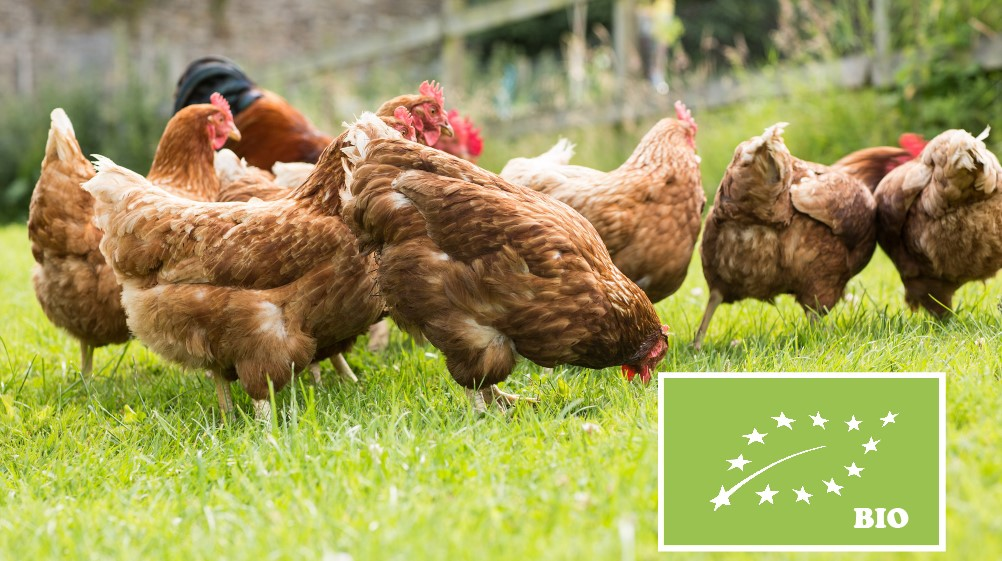 Eierhandel de Noordwateringshoeve Verse BIO eieren